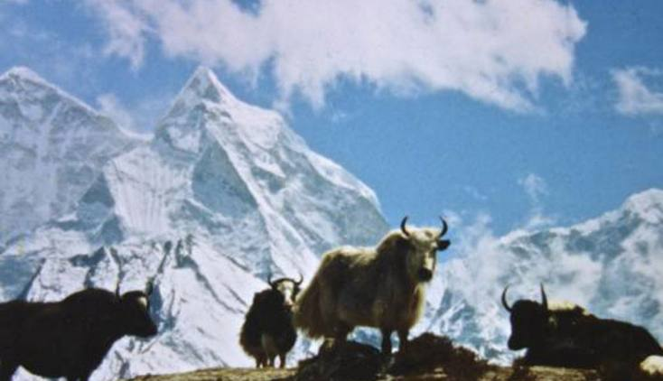 Saipal Himal Expedition